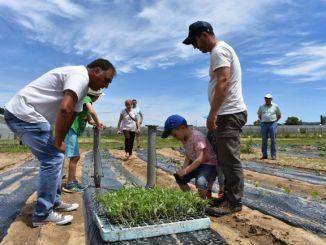 projecte horticultura fundació drissa malaltia mental