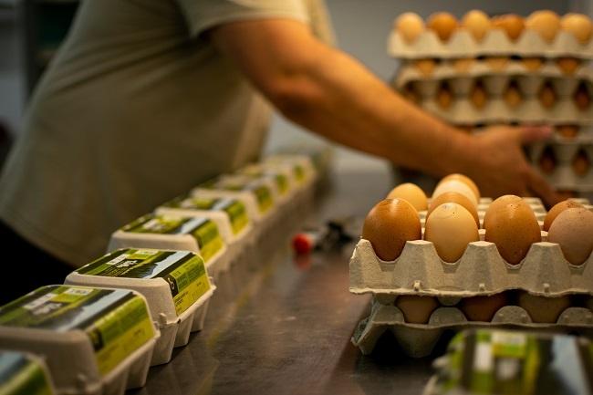 vivelloc campanya ous ecològics