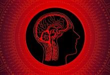 Photo of ¿Coeficiente intelectual o inteligencia emocional?
