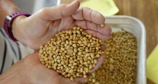 China deja productos de soya y puerco de EE.UU. fuera de subida arancelaria 12