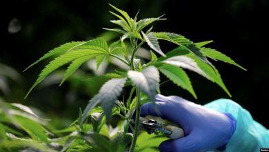 Photo of Ecuador debate aborto y uso medicinal del cannabis