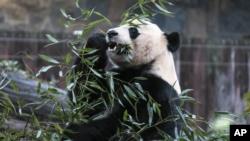 Photo of El panda Bei Bei dice adiós a Washington
