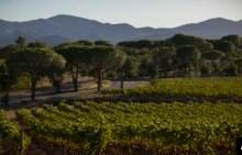 Photo of Mal momento para los vinos franceses