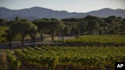 Mal momento para los vinos franceses 2