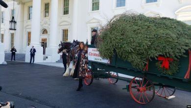 Melania Trump recibe el árbol de Navidad de la Casa Blanca 4