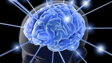 Photo of Científicos argentinos lograron desentrañar los mecanismos cerebrales del olvido