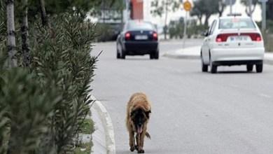 Photo of Gregorio de Laferrere: Se realizará una campaña de castración de animales