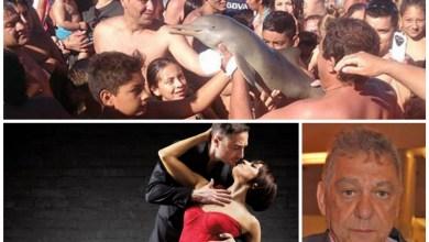 Photo of Opinión:«El delfín, el tango, los funcionarios, yla estupidez humana».Por: Carlos Scavuzzo