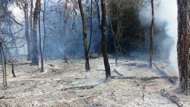 Photo of Peligra la Reserva Ecológica