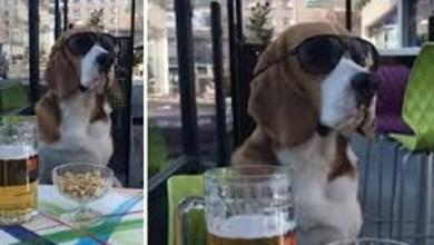 Photo of Viral Youtube: el «perro cool» que es furor