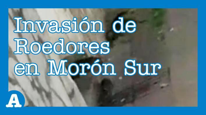 Morón: Invasión de Roedores Altera un Barrio de Haedo. Se trata de uno de los barrio de Morón Sur, exactamente ocurre en la calle Magnasco al 1.100. Los vecinos están preocupados por las enfermedades que transmite los roedores. Dicen que nadie los escucha.