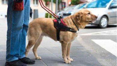 Photo of Cruzada solidaria para que un estudiante ciego de La Plata tenga su perro lazarillo
