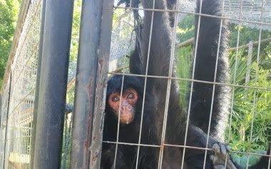 Es viral un video del ex zoo de La Plata y desde el Municipio desmienten el abandono de los animales