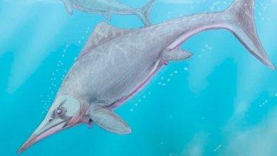 Photo of Científicos de La Plata hallaron un reptil marino de 150 millones de años en la Patagonia