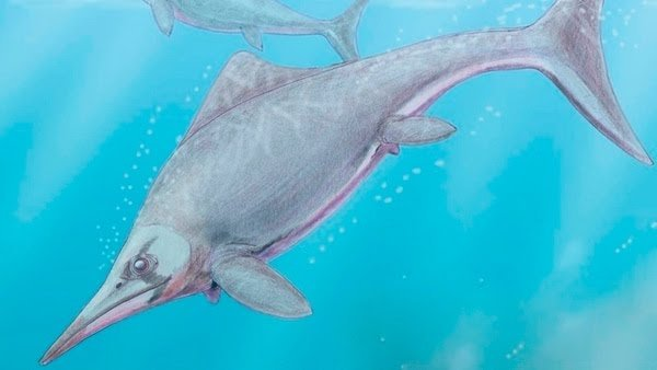 Científicos de La Plata hallaron un reptil marino de 150 millones de años en la Patagonia