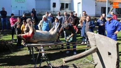 Photo of PRÓXIMO SÁBADO 22 DE FEBRERO  Cipérez celebra una nueva Fiesta de la Matanza Tradicional