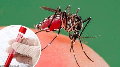 Photo of Un nuevo caso de dengue en La Plata: ya son 16 los infectados