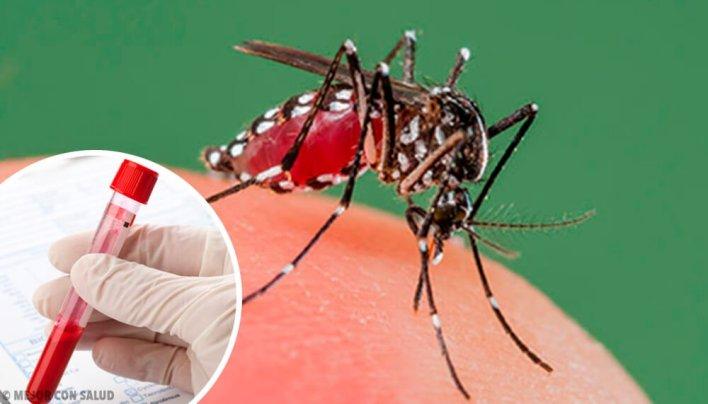 Un nuevo caso de dengue en La Plata: ya son 16 los infectados