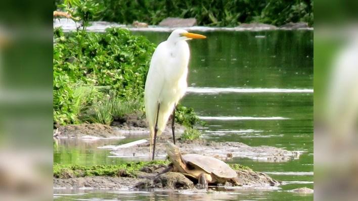 Primer relevamiento de fauna en el Arroyo Morón: Mirá las fotos