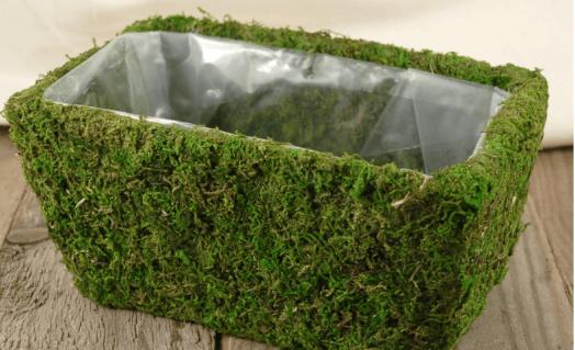 Cómo secar musgo para decoración, idea de maceta