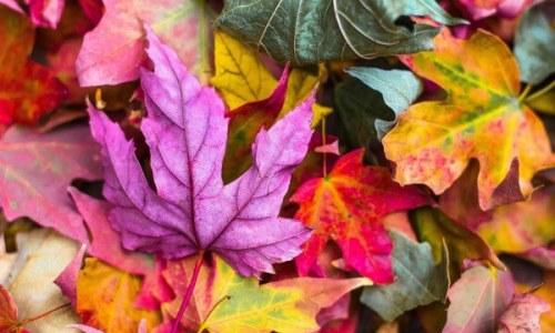 Manualidades para decorar en otoño