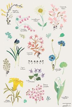 Dibujar y pintar plantas- botánica