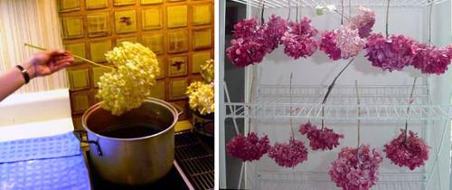 Teñir y secar hortensias