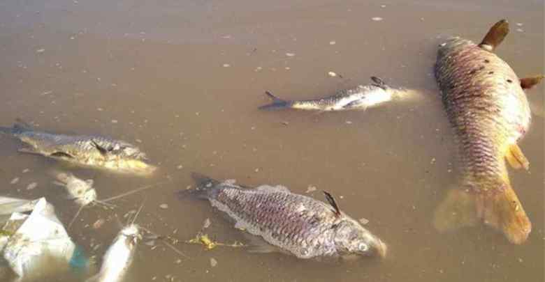 muerte-de-peces-rio-paraguay-diarioasuncion