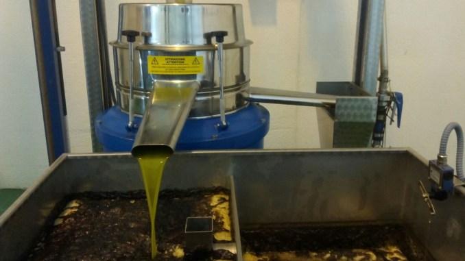 El aceite de Jaraíz tiene un sabor exquisito