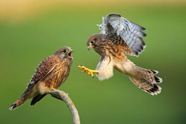 Hoy ha arrancado la edición virtual de FIO que sitúa a Extremadura como referente mundial del turismo ornitológico