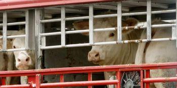 España. control, transporte animales vivos,