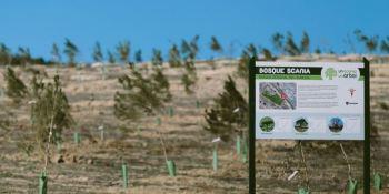 Bosque Scania, cuenta, 20.000, árboles, plantados,