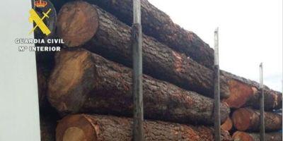 Denuncian a un camionero que transportaba madera con un exceso de peso de más 18 toneladas