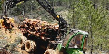 Leñas El Cardoso S.L. emplea a 10 trabajadores en la Sierra Norte de Guadalajara