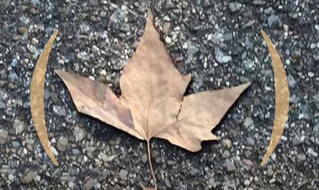No Fall