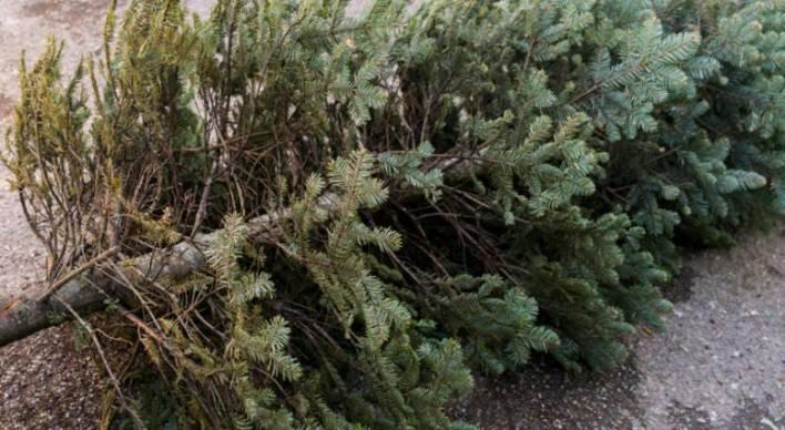 ¿Que hacer con el Árbol de Navidad usado?