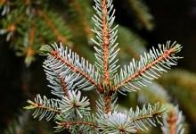 Photo of ¿Qué hacer con el Árbol de Navidad usado?