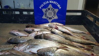 Photo of Polícia Marítima apreendeu 500 Kg de pescado e uma arte de pesca no rio Tejo