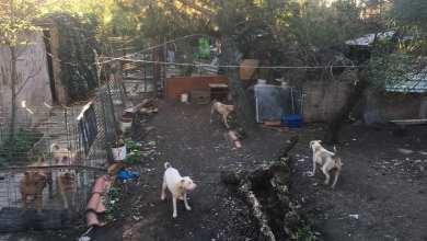 Photo of Moradores denunciam condições de canil ilegal em Almada