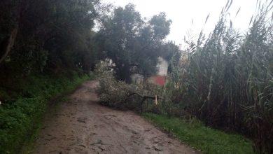 Photo of Queda de árvores e de andaimes não dão tréguas às forças de segurança