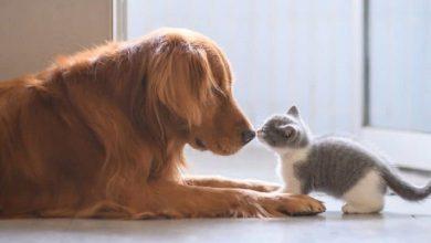 Photo of «Animais não podem ser encarados como bens de luxo»
