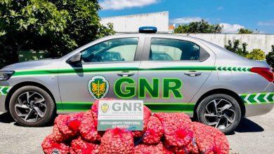 Photo of GNR apreendeu 300 quilos de amêijoa-japonesaem Alcochete