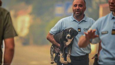"""Photo of Associação da GNR diz que militares """"não podem ser bode expiatório"""" no caso dos canis"""