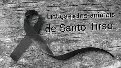 Photo of Petição exige justiça contra proprietária de canil onde morreram animais em Santo Tirso
