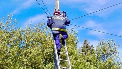 Photo of Bombeira de Famalicão resgata gato de poste de electricidade