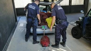 Photo of Polícia Marítima apreendeu 700 kg de amêijoa-japonesa no estuário Tejo no Barreiro