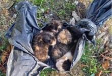 Photo of GNR resgatou gatinhos de caixote do lixo em Lamego