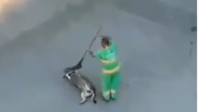 Photo of Varredor proporciona momentos de carinho a cão de rua