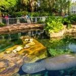 SeaWorld Orlando (FL) abre para visitação área de reabilitação de peixes-bois resgatados