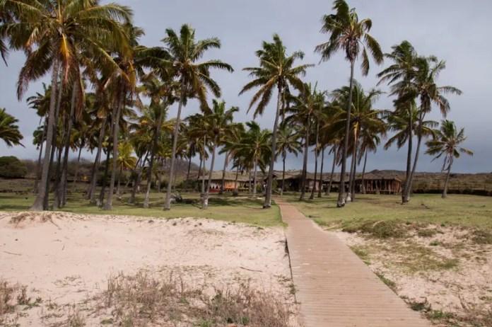 Os coqueiros que decorram a praia de Anakena lembram, por sua distribuição tamanho e bailado, os coqueiros do Jardim de Alá, em Salvador